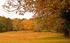 Autumn colors - Scots Bridge Road, Anderson Co, SC (DT's Photo Site - Anderson S.C.) Tags: canon 5d classic 1740mml lens wide angle upstate andersonsc autumn colors fall foliage pasture horse grazing rural scenic southern landscape america usa november pastoral country roads