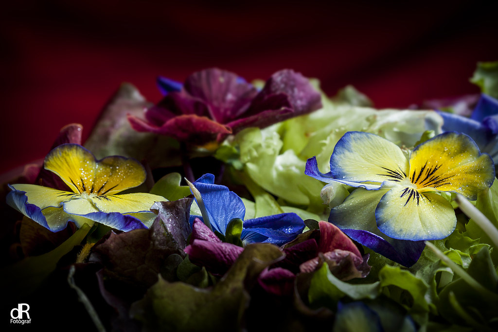 The World\'s Best Photos of ensalada and flores - Flickr Hive Mind