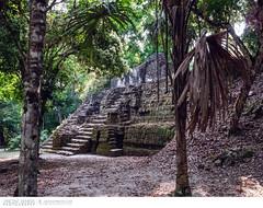 Mayan ruins in Tikal, Guatemala (Vincent Demers - vincentphoto.com) Tags: voyage trip travel building history archaeology latinamerica architecture temple ancient rainforest ruins pyramid guatemala unescoworldheritagesite mayan tikal oldbuilding centralamerica petén mayantemple traveldestination tikalnationalpark mayancity
