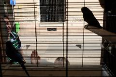 (Norbert Farkas (francisgod)) Tags: colour window hand head streetphotography parrot half fujix100s budapestreet