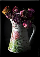 ODC-Pitcher & Dried Roses (Ahhh-In The 70's...So Nice :)) Tags: pink flowers red orange white black yellow glow clean pitcher hdr topaz adjust onblack driedroses odc photomatix photoscape pse13