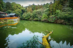 Fushimi Pond (ErikFromCanada) Tags: travel trees sky plants lake reflection tree green nature water japan forest fence japanese moss pond log kyoto shrine waterfront outdoor hiking branches wideangle hike ultrawide mossy fushimiinaritaisha