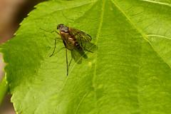 AAAAH! Theres a Fly! (Michael Eickelmann) Tags: macro fly klein insects makro animalplanet insekten fliege welt