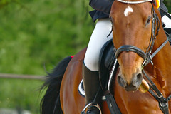 A tongue like a horse (christian.riede) Tags: horse tongue bein pferd reiten zunge gebiss stiefel trense springreiten martingal