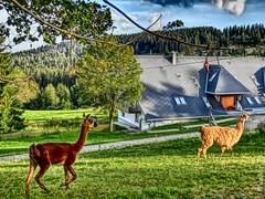 Blasiwald(4) (PhosMaS70_) Tags: deutschland schluchsee 2014 badenwrttemberg panoramio5143442112168131