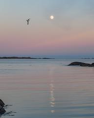 Ved Kvennebekken (Birgit F) Tags: lensbaby juli 2016 fevik kvennebekken edge80 fotobirgitfostervold