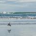Muriwai Torpedo Fishing