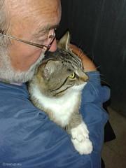 Happy International Cat Day (Finn Frode (DK)) Tags: cat adoption shelter dyrevrnet bastian bailey mixedbreed domesticshorthair animal pet indoor internationalcatday catday