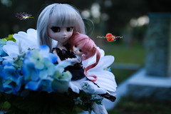 For Her I Will Become Darker Than Night (dreamdust2022) Tags: pink baby cute girl loving happy sadness pain hug kiss doll pretty power princess little sweet fear young evil kind passion pullip charming playful tender suigintou darkangle sweetiepiestrawberries