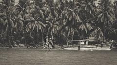 IMG_8164 (shitabhpillai) Tags: sea trees coconut boat ferry birds black white monochrome canon 6d kerala india south fish backwaters