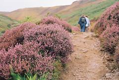 Edale 20/08/2016 (lynnmariehall) Tags: moors moorland heather hills hilltops edale peaks