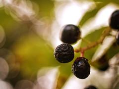 2016-09-04_16-04-26 (torstenbehrens) Tags: lumix nature bokeh panasonic dmcg1