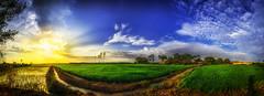 Sembros de arroz (Daniel Fotografia :)) Tags: yellow exit per atardecer luz sunset sun nubes infinito airelibre cielo light sol sky salida naturaleza nature campo verde blue piura sullana arroz sembrio