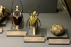 Flying Jewels (stefan_fotos) Tags: butterfly germany insect deutschland jasper saxony sachsen minerals terra insekten schmetterling freiberg mineralien orientalis goliathus mineralia