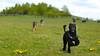 Fornebu mai 2015 (Rune Lind) Tags: summer dog playing dogs oslo norway norge sommer hunting running på otto gress fornebu leker 2015 grønt schafer løper storpuddel utendørs jakter fornebustranda konepuddel fornebustranden