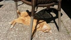 Sunbathing (isco786) Tags: cat katzen sunbathing sonnenbaden gingertomcat
