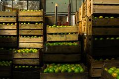 Mercado Municipal Paulistano | Limes (Eduardo Maida) Tags: brazil color verde green frutas colors fruit cores lemon saopaulo market sopaulo lemons mercado crates limo bigmarket limes mercado caixotes mercadodesopaulo brazilianmarket mercadopaulistano
