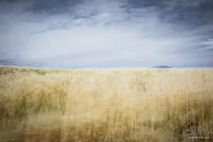 Óleo sobre sensor digital. (Jose HL) Tags: landscape paisaje viento movimiento nubes campo cereales oleo josehernandez abtracto hijate