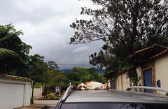 Nap time (koheka) Tags: tree verde green car paraty cat nap sleepy gato carro neko naptime árvore soneca cochilo
