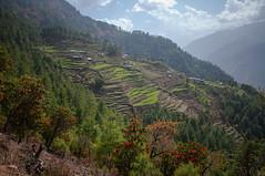 05042015-DSC_6800.jpg (seb.grd) Tags: nepal vacances np npal langtang brabal rgiondedveloppementcentre