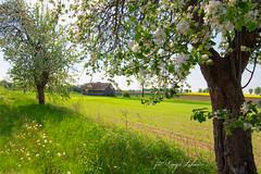 Spring (kinga.lubawa) Tags: colors canon spring sensual kwiaty wiosna kwiat kolory kolorowe soneczny sonecznie canon6d