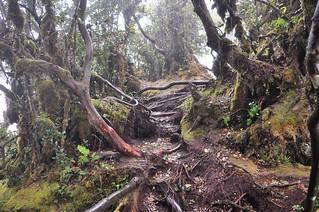 cameron highlands- malaisie 18