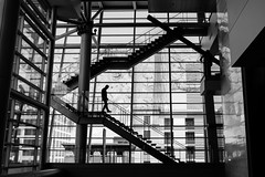 Staircase (Warfield360) Tags: windows blackandwhite man building tree silhouette architecture stairs reflections etching columns figure topomap tacomaconventioncenter