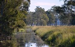 Stoney Island Drain (dustaway) Tags: winter water reflections landscape day wildlife sunny australia drain nsw australianlandscape waterscape ruralaustralia northernrivers tuckeanswamp stoneyislanddrain