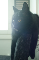 (4ntti) Tags: light black window cat chair flare noise