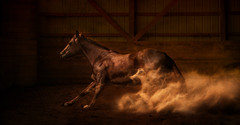 Reiner In Action (Ryan Courson) Tags: horses britishcolumbia dust reining equinephotography photographyworkshops