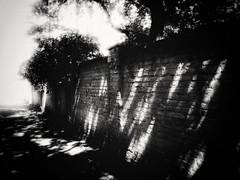 Wall (J.C. Moyer) Tags: trees shadow blackandwhite tree brick wall rustic brickwall shade hedera urbanphotography