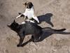 Cat fight (f-arbe) Tags: cat fight kitten katze kätzchen quarrel balgerei