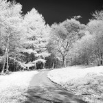 IR in the Yorkshire Wolds 5