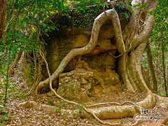 Nature Calls- Koh Ker