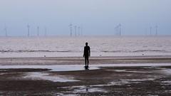 Silent Expectation (pjfchad) Tags: beach windmill liverpool sand energy alone power seagull statues sculptures windturbine windfarm crosby windpower antonygormley merseyside irishsea renewableenergy generate greenenergy anotherplace crosbybeach liverpoolbay
