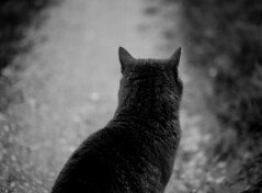 longing (mripp) Tags: white black nature animal cat mono dream want desire wanted katze feeling feelings sehnsucht fantasie phantasie traum gefhl gefhle monchrom