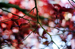 abstract red (Stefano Rugolo) Tags: pentaxk5 smcpentaxm50mmf17 palazzopatrizi castelgiuliano garden ligth bokeh colors plant spring 2015 lazio italy depthoffield dof abstract red stefanorugolo