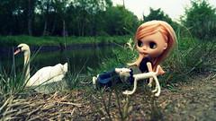 D'arcy: swan whisperer!
