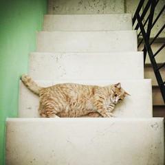 The Escher cat (Augusto Mia Battaglia photography) Tags: cat escher motoxplay