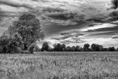 About some trees (Valerio Santagostino) Tags: trees sky blackandwhite white black alberi clouds grey noir nuvole country campagna cielo blanc bew blacksoul