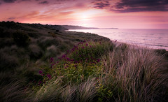 Carbis Bay (David Haughton) Tags: uk pink sunset summer sky southwest grass evening bay coast sand cornwall dunes porth coastline kidney stives cornish carbis coastpath longgrasses