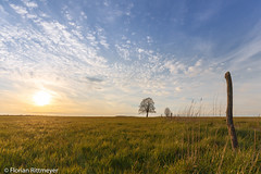 Vogelsberg (Flotschie1976) Tags: sunset sun tree field clouds abend warm sonnenuntergang feld wolken sonne baum vogelsberg