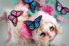 Butterfly butterfly...