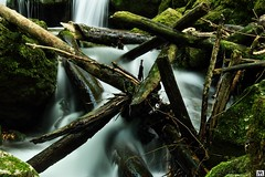 sticks and stones (yves_matiegka) Tags: longexposure brown white green nature water forest waterfall moss spring sticks rocks stream stones logs driftwood