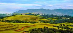 World's End at Moon Plains – Nuwara Eliya, Sri Lanka – නුවර එලියේ සඳතැන්න ලෝකාන්තය (Dunstan Fernando) Tags: නුවරඑලියේසඳතැන්නලෝකාන්තය worldsendatmoonplains–nuwaraeliya moonplains nuwaraeliya srilanka dunstanphotography dunstan landscape srilankalandscape beautifulsrilanka wwwflickrcomphotosdunstanfdo nikon nikkor mountains green countryside hillcountry serene national view