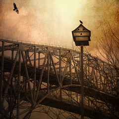 House Calls (jumpinjimmyjava) Tags: bridge light house bird art nature hawk ominous foreboding fineart birdhouse textures avian impending artography