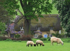 broadway, the cotswolds (gerben more) Tags: england house tree animal europe sheep cottage broadway meadow cotswolds