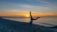 TH20160505A608368 (fotografie-heinrich) Tags: strand sonnenuntergang himmel ostsee personen zingst buhnen radschlagen stdteortschaften