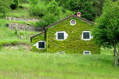 My land is not only sea ... (Augusta Onida) Tags: italy house tree verde green grass casa italia liguria country campagna erba albero valdivara vareseligure