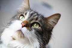 20160522-D7-DSC_1758.jpg (d3_plus) Tags: cats animal japan cat nikon bokeh daily telephoto  tele nikkor  kanagawa dailyphoto  70210 thesedays  70210mm  70210mmf4    70210mmf4af 702104 d700 nikond700 aiafnikkor70210mmf4s 70210mmf4s